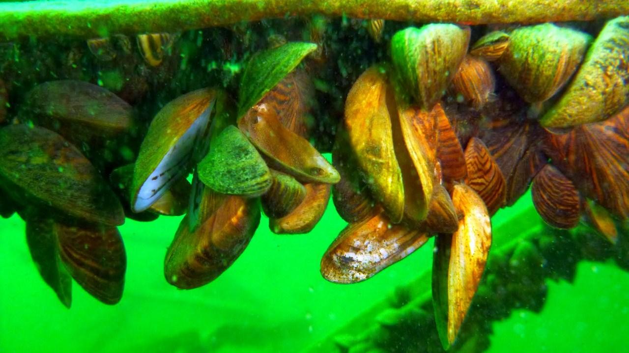 nurkowanie-jezioro-tarnobrzeskie-26