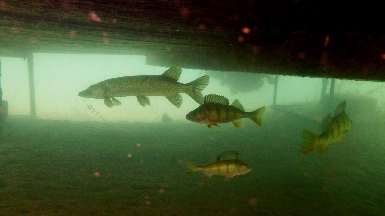 nurkowanie-jezioro-tarnobrzeskie-33_0