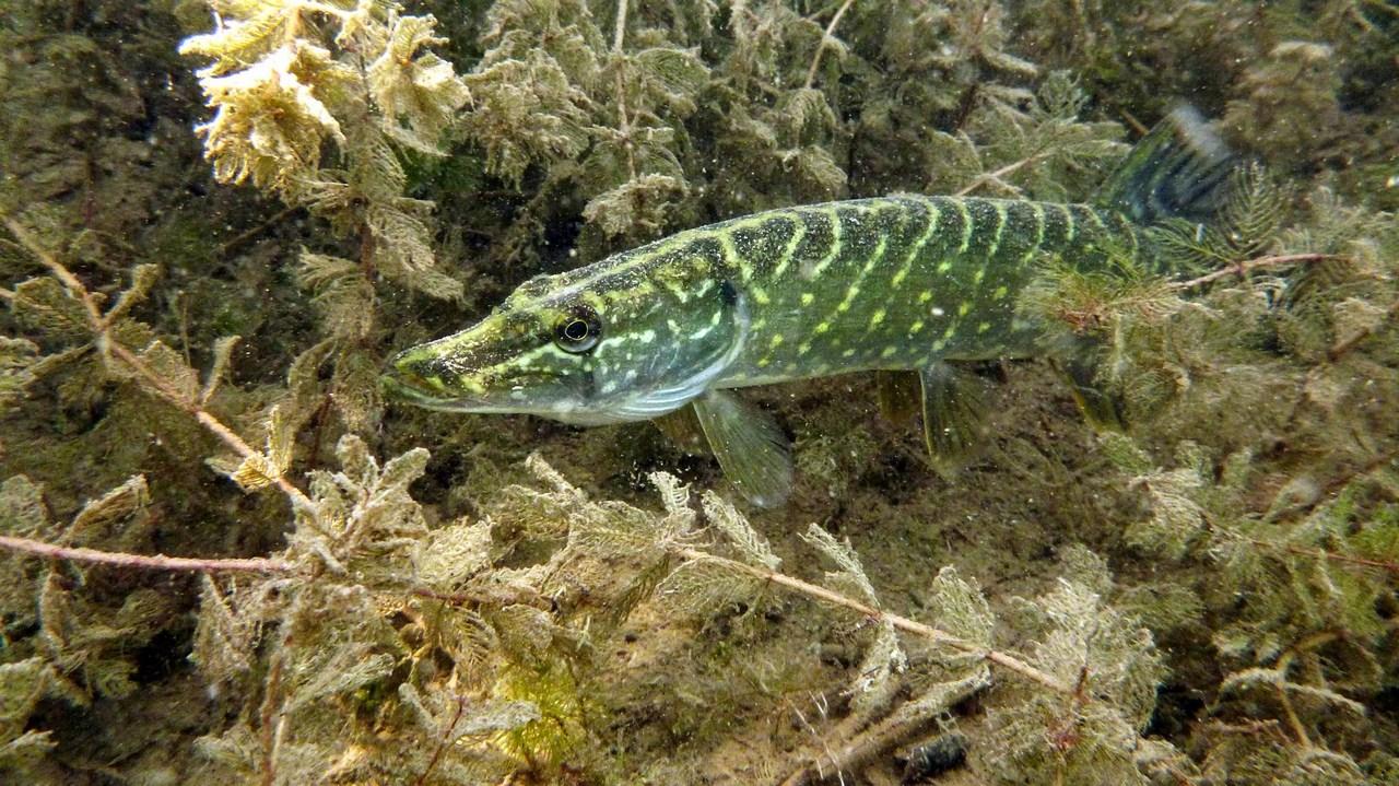 nurkowanie-jezioro-tarnobrzeskie-37_0
