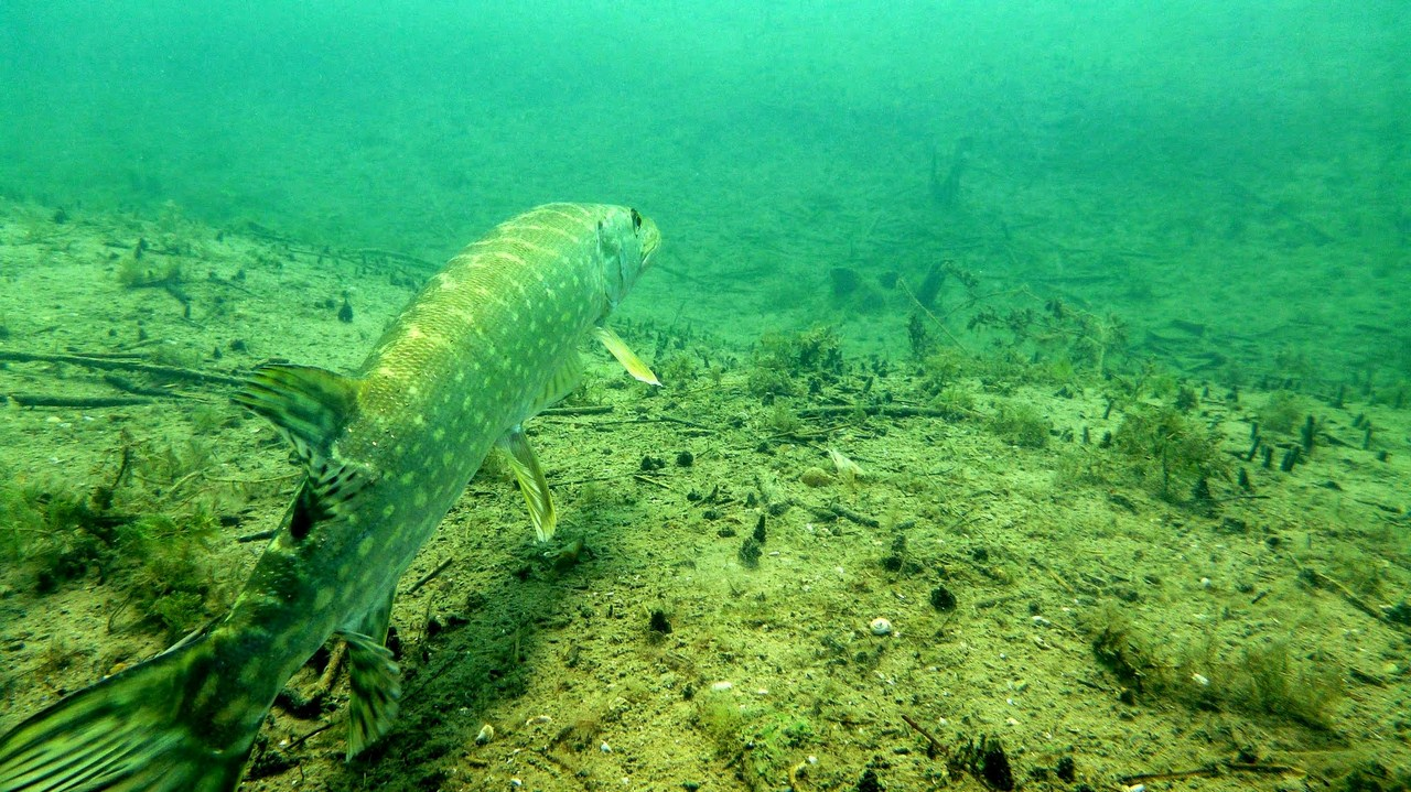 nurkowanie-jezioro-tarnobrzeskie-47_0