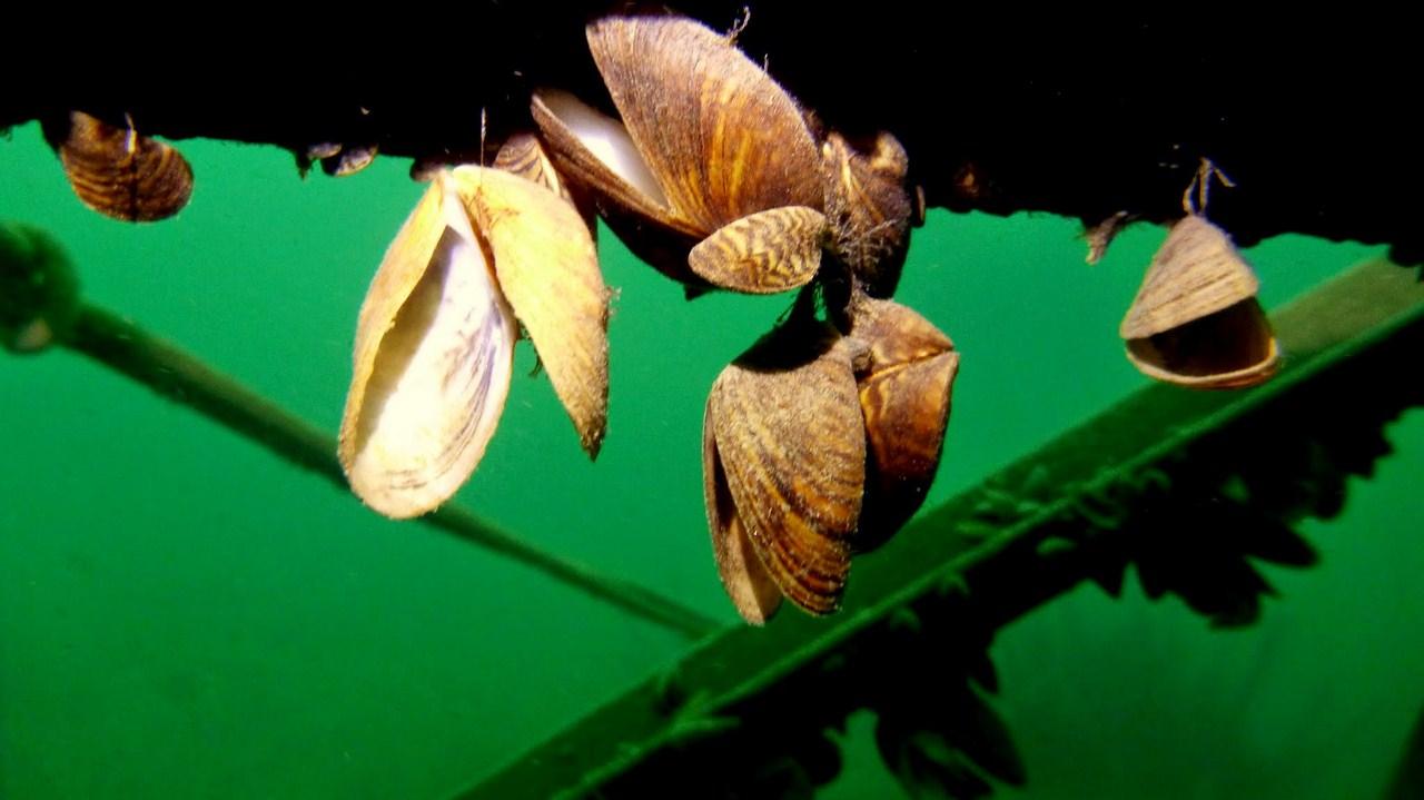 nurkowanie-jezioro-tarnobrzeskie-53