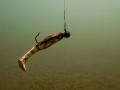 nurkowanie-jezioro-tarnobrzeskie-28