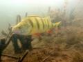 nurkowanie-jezioro-tarnobrzeskie-31