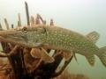 nurkowanie-jezioro-tarnobrzeskie-34