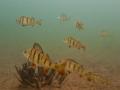 nurkowanie-jezioro-tarnobrzeskie-38_0
