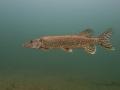 nurkowanie-jezioro-tarnobrzeskie-40