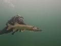 nurkowanie-jezioro-tarnobrzeskie-41