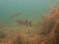 nurkowanie-jezioro-tarnobrzeskie-43_0