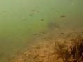 nurkowanie-jezioro-tarnobrzeskie-49_0