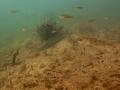 nurkowanie-jezioro-tarnobrzeskie-50_0