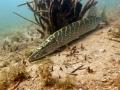 nurkowanie-jezioro-tarnobrzeskie-51