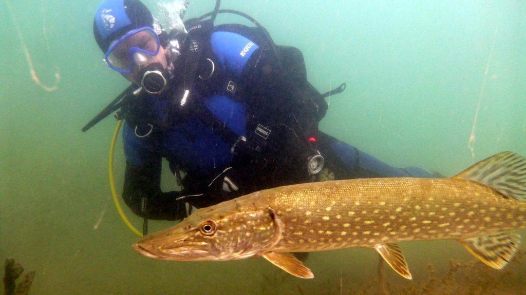 nurkowanie-jezioro-tarnobrzeskie-32