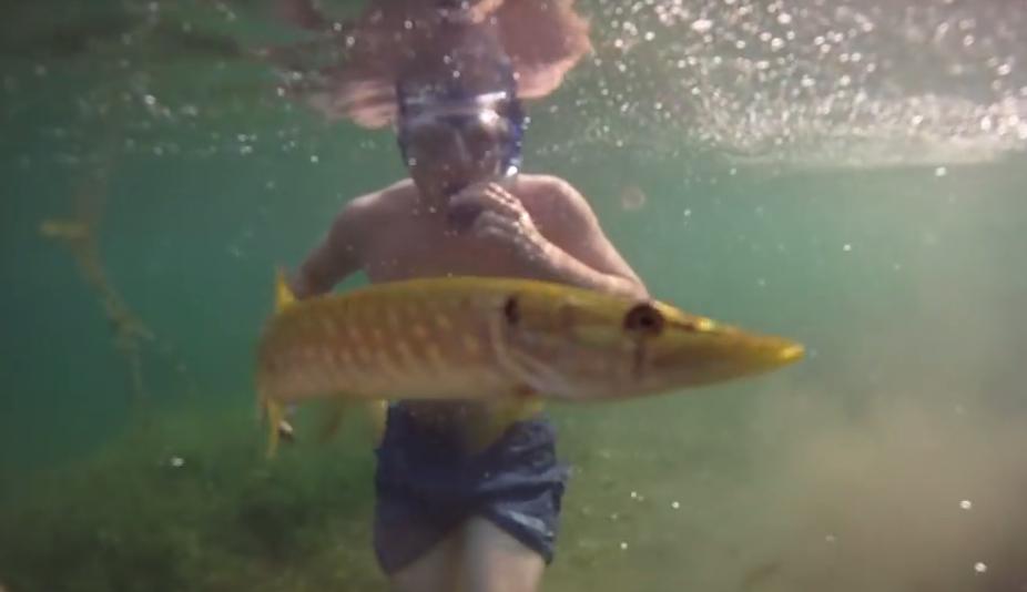 podwodne życie jeziora tarnobrzeskiego