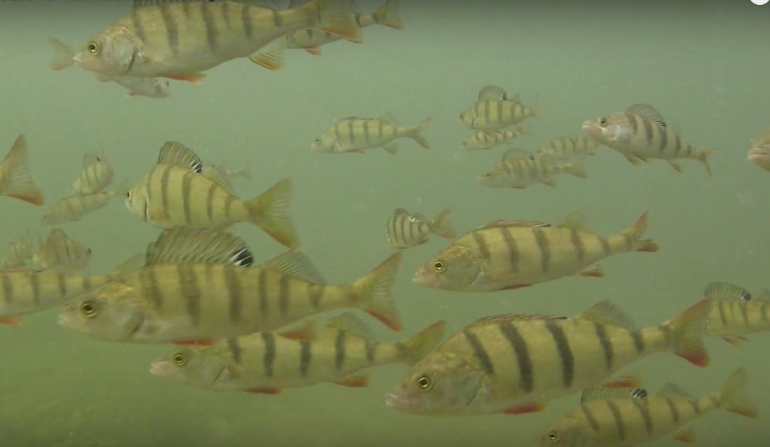 jezioro tarnobrzeskie jak akwarium